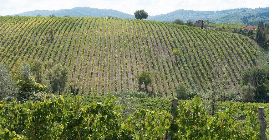 Chianti hills