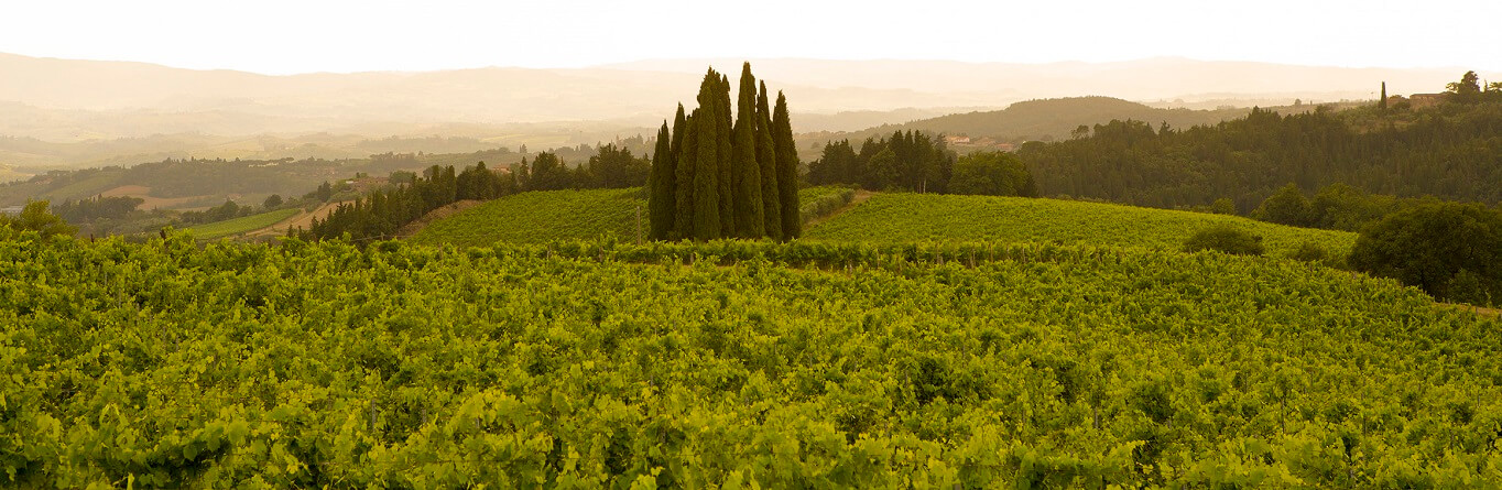 What is the history of Wine in Tuscany?