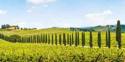 Half Day Chianti Wine Tour from Florence €44